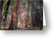 Redwood Greeting Cards - Shady Path Greeting Card by Jane Linders