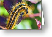 Trippy Greeting Cards - Shagerpillar Greeting Card by Bill Tiepelman