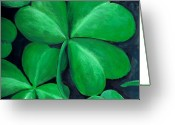 Green Painting Greeting Cards - Shamrocks Greeting Card by Nancy Mueller