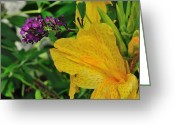 Canna Greeting Cards - Sharing the Spotlight Greeting Card by Gene Sherrill