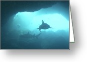 Pacific Islands Greeting Cards - Sharks Circling In Cave Greeting Card by Chris Stankis