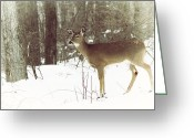White Tailed Deer Greeting Cards - She Sees You Greeting Card by Karol  Livote