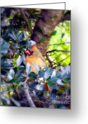 Colorful Birds Photo Greeting Cards - She Waits Greeting Card by Karen Wiles