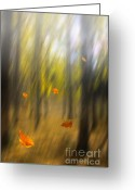 Leave Greeting Cards - Shed leaves Greeting Card by Veikko Suikkanen