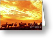 Webster County Greeting Cards - Sheep at Sunrise Greeting Card by Thomas R Fletcher