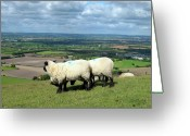 Tor Greeting Cards - Sheep at Westbury Tor Greeting Card by Kurt Van Wagner