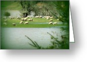 Flooding Greeting Cards - Sheep Grazing Amidst Flood Greeting Card by Cindy Wright