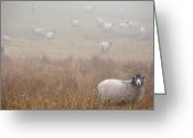 Foraging Greeting Cards - Sheep Grazing In A Field On A Foggy Day Greeting Card by Dawn Kish