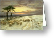 Sunset Light Greeting Cards - Sheep in the Snow Greeting Card by Joseph Farquharson