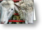 Mutton Greeting Cards - Sheep Greeting Card by Michelle Calkins