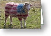 Dye Greeting Cards - Sheep with American flag Greeting Card by Garry Gay