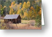 C Casch Greeting Cards - Sheepherders Cabin In The Fall Greeting Card by C Casch