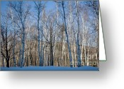 Appalachian Trail Greeting Cards - Shelburne Birches in Snow Greeting Card by Susan Cole Kelly