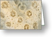 Biologist Greeting Cards - Shell - Conchology - Coral Greeting Card by Mike Savad
