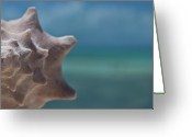 Sea Animal Greeting Cards - Shell Greeting Card by Gizet Gonzalez