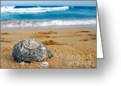 Shell Texture Greeting Cards - Shell washed ashore Greeting Card by Kaye Menner