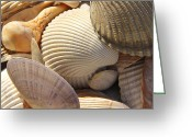 Shells Digital Art Greeting Cards - Shells 1 Greeting Card by Mike McGlothlen