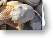Shells Digital Art Greeting Cards - Shells 2 Greeting Card by Mike McGlothlen