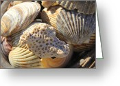 Shells Digital Art Greeting Cards - Shells 3 Greeting Card by Mike McGlothlen