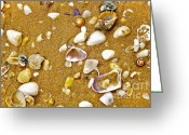 Seashell Photography Greeting Cards - Shells in the Sand Greeting Card by Kaye Menner