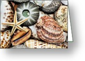 Poisonous Greeting Cards - Shellscape Greeting Card by Kaye Menner