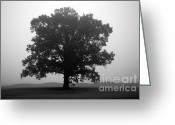 Tree Prints Greeting Cards - Shelter Greeting Card by Amanda Barcon