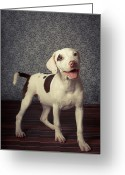Panting Dog Greeting Cards - Shelter Puppy Greeting Card by Square Dog Photography