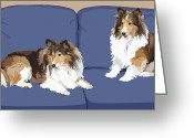 Chic Greeting Cards - Sheltie Chic Greeting Card by Kris Hackleman
