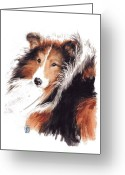 Sheepdog Greeting Cards - Sheltie Greeting Card by Debra Jones