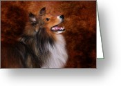 Shetland Sheepdog Greeting Cards - Sheltie I Greeting Card by Jai Johnson