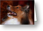 Sheltie Greeting Cards - Sheltie II Greeting Card by Jai Johnson