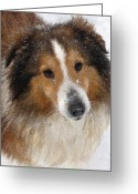 Shetland Sheepdog Greeting Cards - Sheltie In The Snow Greeting Card by Jane Schnetlage