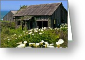 Lilies Greeting Cards - Shepherss shack Greeting Card by Garry Gay