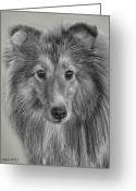Shetland Sheepdog Greeting Cards - Shetland Sheepdog Greeting Card by Larry Linton