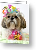 Ribbon Greeting Cards - Shih Tzu Dog Greeting Card by Geri Lavrov