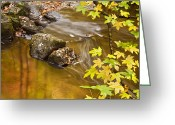 Maple Photographs Greeting Cards - Shimmering Gold Greeting Card by Rob Travis