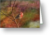 House Finch Greeting Cards - Shine Your Light On Me House Finch Greeting Card by J Larry Walker