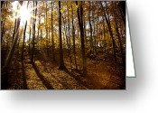Red Leaves Greeting Cards - Shining Sun in The Woods Greeting Card by Kamil Swiatek