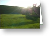 Phuong Tu Greeting Cards - Shiny Grass Greeting Card by Phuong Tu