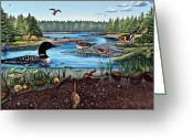 Ecosystem Greeting Cards - Ship Harbor Mudflat in Acadia National Park Greeting Card by Logan Parsons
