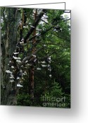 Ceremony Greeting Cards - Shoe Tree Greeting Card by Linda Knorr Shafer