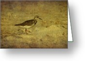 Panama City Beach Greeting Cards - Shore Bird Greeting Card by Sandy Keeton