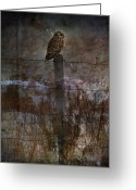 Water Framed Prints Posters Greeting Cards - Short Eared Owl Greeting Card by Jerry Cordeiro