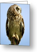 Bison Range Greeting Cards - Short-eared Owl profile Greeting Card by Merle Ann Loman