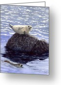  Ocean Greeting Cards - Show Off Greeting Card by Catherine G McElroy
