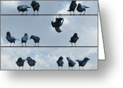 Crow Digital Art Greeting Cards - Show Off Greeting Card by Cynthia Decker