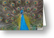 True Colors Greeting Cards - Showing Your True Colors Greeting Card by Terri Thompson