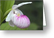 Showy Greeting Cards - Showy Ladyslipper Greeting Card by Larry Ricker
