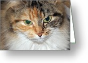 Playful Kitten Greeting Cards - Shpooleete. Cats Portrait. Square Format. Greeting Card by Ausra Paulauskaite