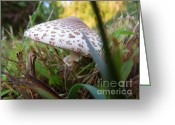 Linda Seacord Greeting Cards - Shroom Among the Grass Greeting Card by Linda Seacord